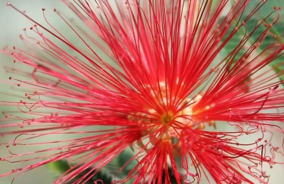 red-flower-1023537_960_720